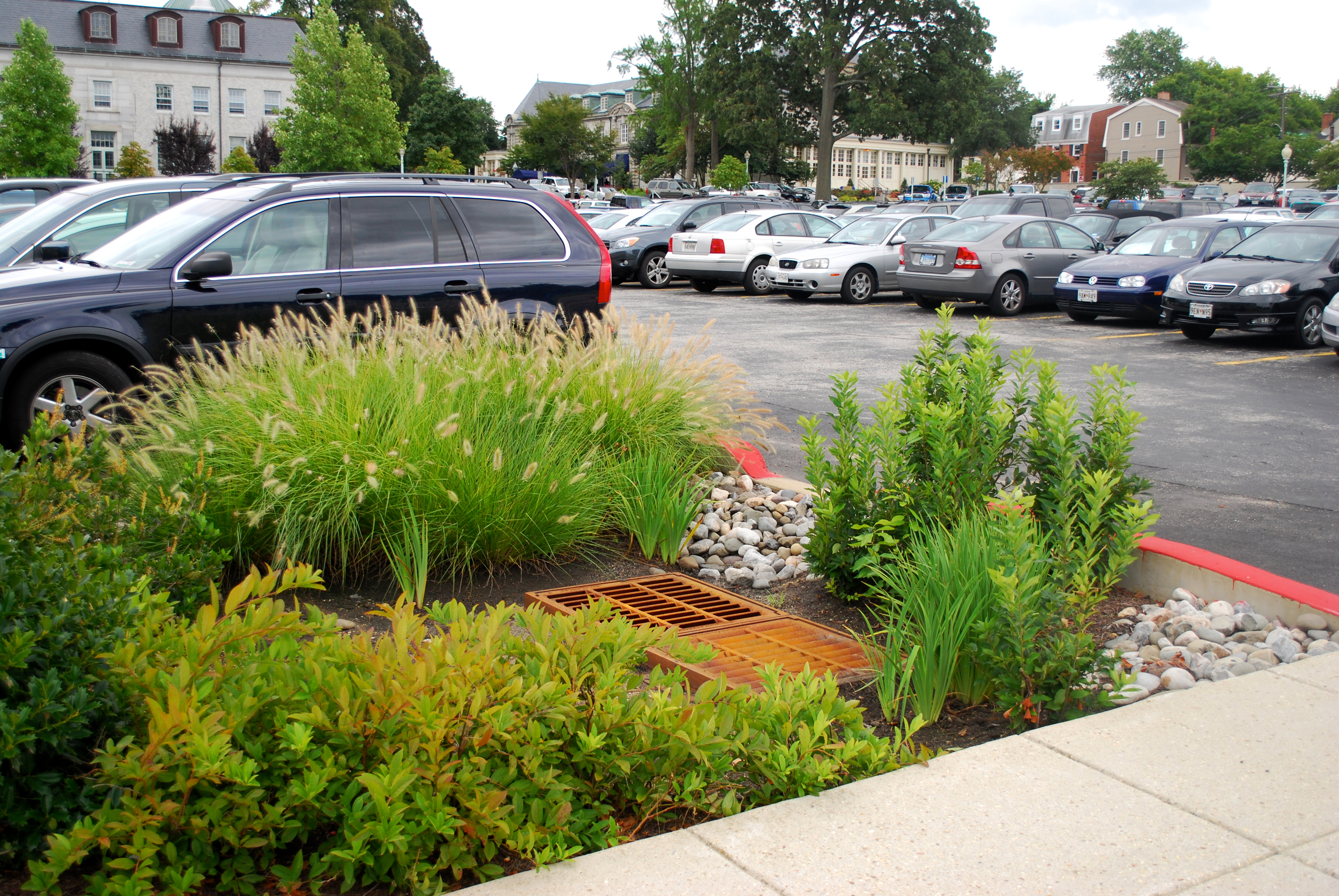 Car Park Raingarden in America